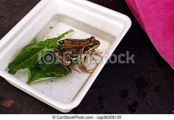 Frog sitting in the box - csp36309135