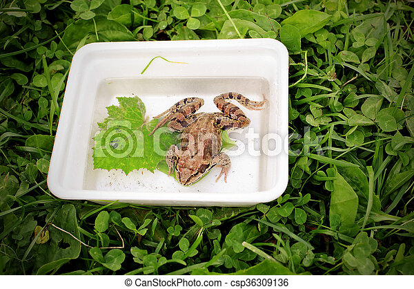 Frog sitting in the box - csp36309136
