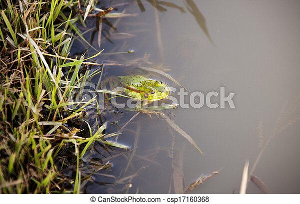 Frog - csp17160368