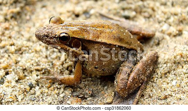 frog - csp31862060
