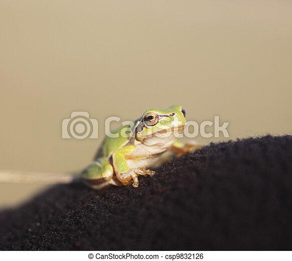 Frog - csp9832126