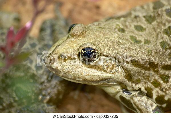 Frog - csp0327285