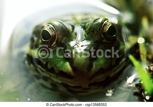 frog - csp13568353