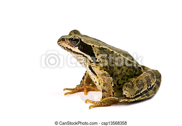 frog - csp13568358
