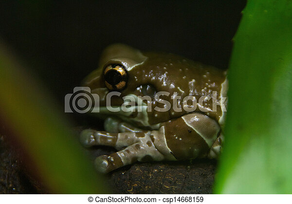Frog - csp14668159