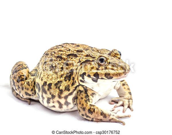 Frog - csp30176752