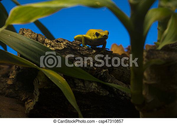 frog - csp47310857