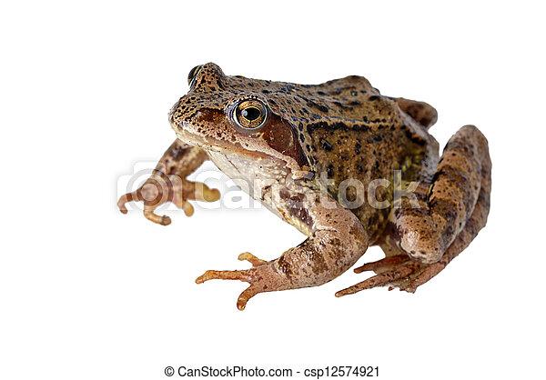 frog - csp12574921