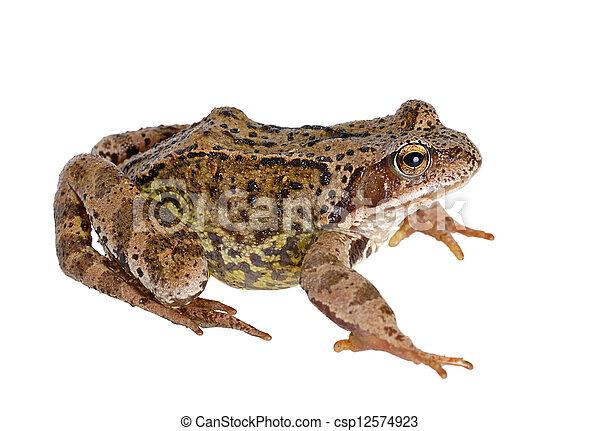 frog - csp12574923