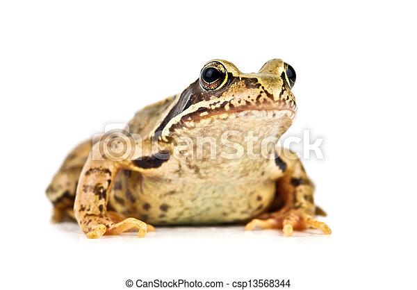 frog - csp13568344