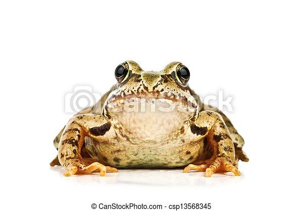 frog - csp13568345