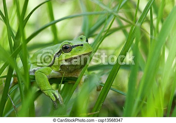 frog - csp13568347
