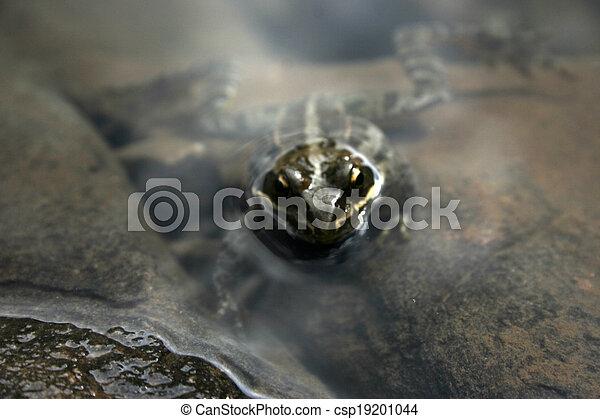 frog - csp19201044