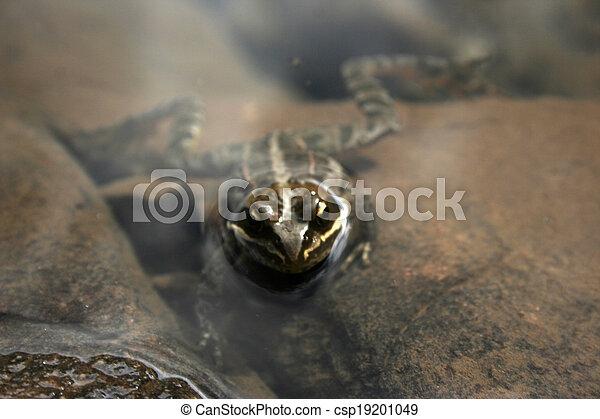 frog - csp19201049