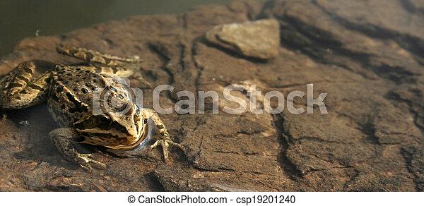 frog - csp19201240