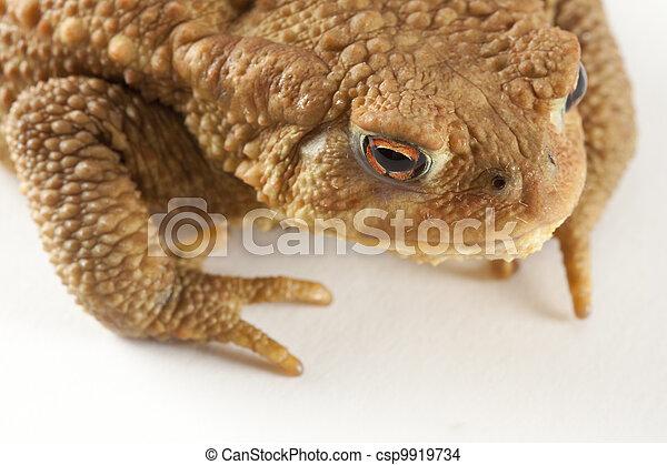 frog - csp9919734