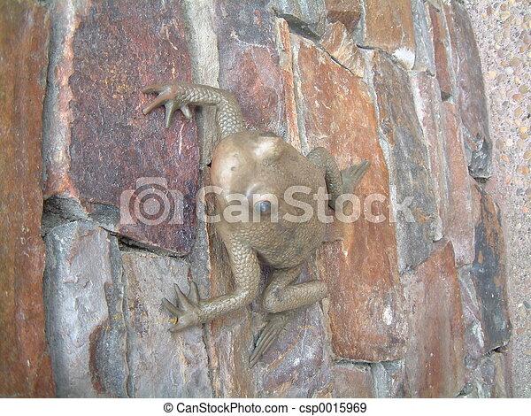 Frog - csp0015969