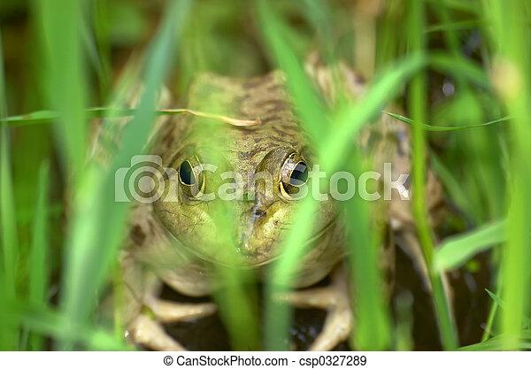 Frog - csp0327289