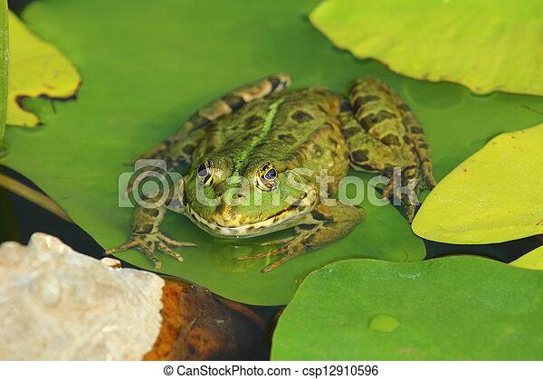 Frog - csp12910596