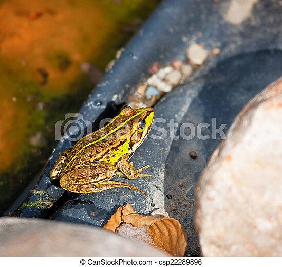 Frog - csp22289896