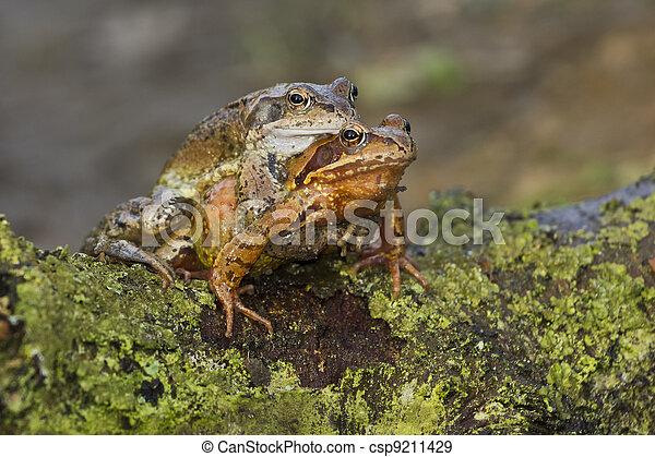 Frog - csp9211429