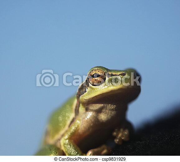 Frog - csp9831929