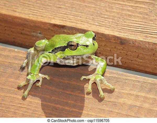 frog - csp11596705