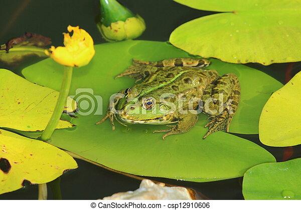 Frog - csp12910606