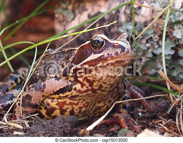 Frog - csp15013500