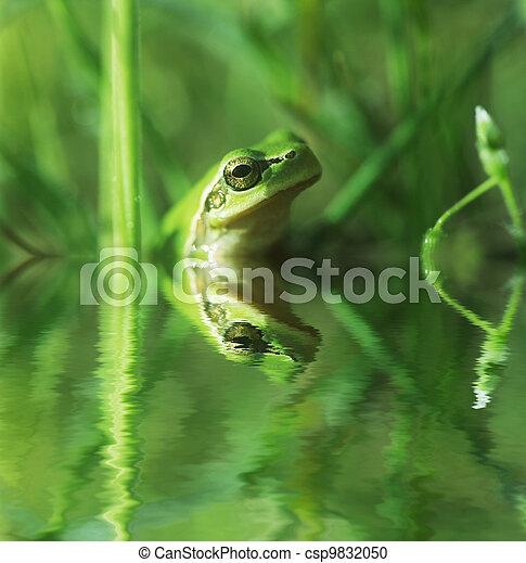 Frog - csp9832050