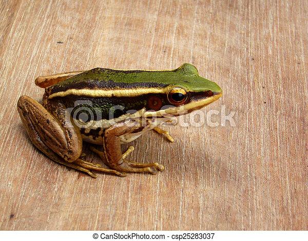 frog - csp25283037