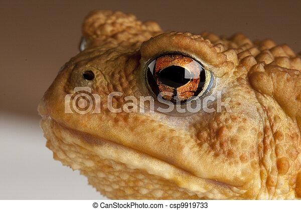 frog - csp9919733