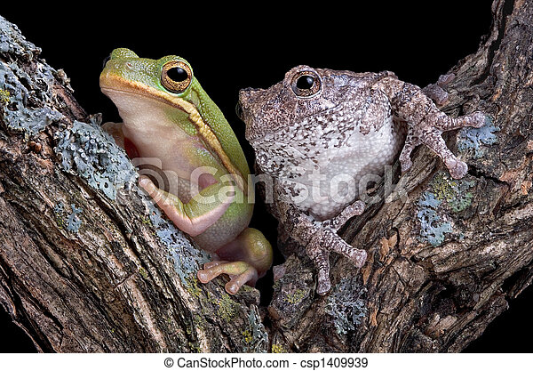 Froggy friends - csp1409939