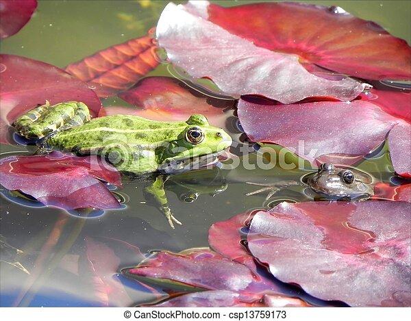 Froggy love - csp13759173