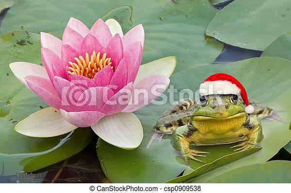 Froggy Santa - csp0909538