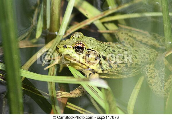 Froggy - csp2117876