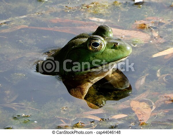 Froggy - csp44046148