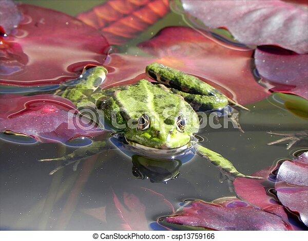 Froggy sunbath - csp13759166