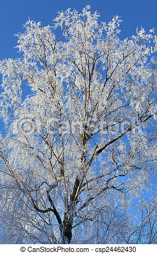 Frost and snow covered tree - csp24462430
