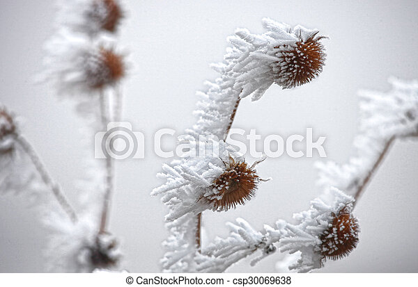 Frost Covered Flowers - csp30069638