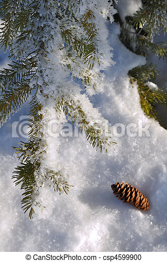 Frost Covered Spruce Tree Branch - csp4599900