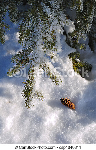 Frost Covered Spruce Tree Branches - csp4840311