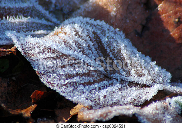Frost on a leaf - csp0024531