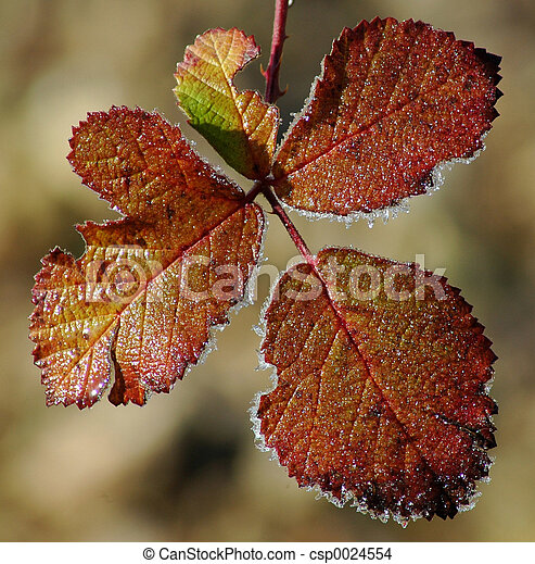 Frost on leaves - csp0024554