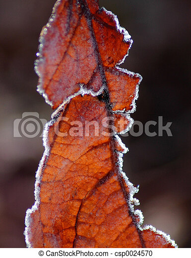Frost on red leaves - csp0024570