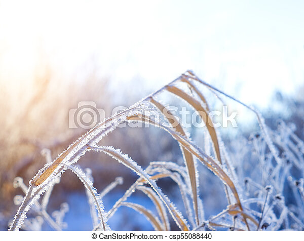Frost on the grass in winter day - csp55088440