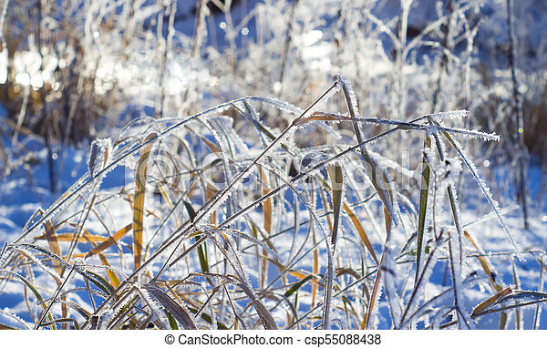 Frost on the grass in winter day - csp55088438