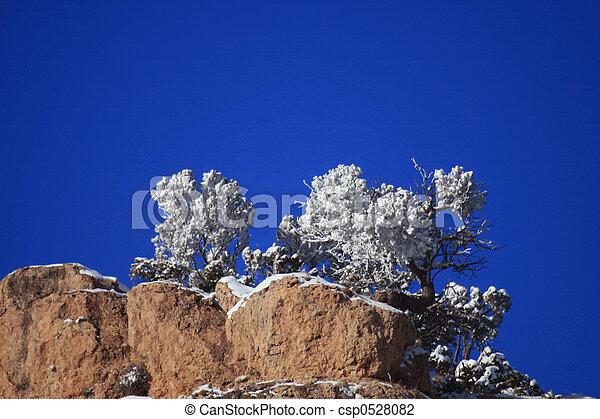 Frosty Trees - csp0528082