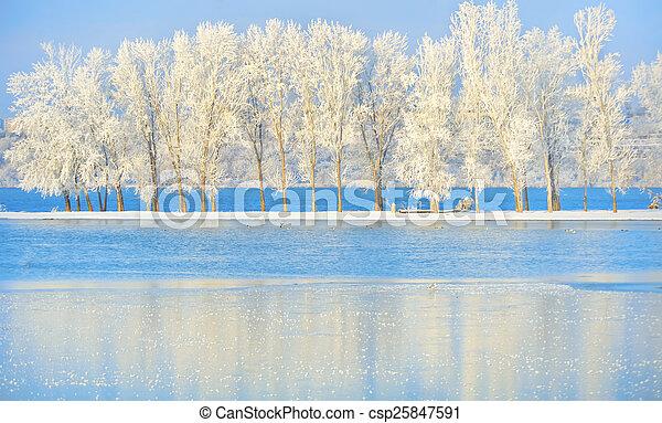 Frosty winter tree - csp25847591