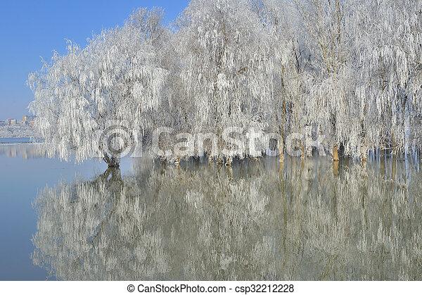Frosty winter trees - csp32212228